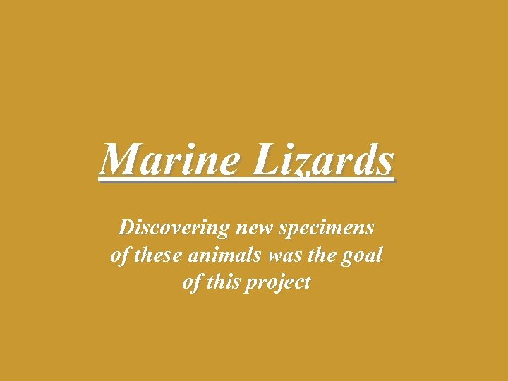 Marine Lizards Discovering new specimens of these animals was the goal of this project