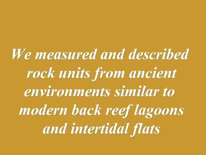 We measured and described rock units from ancient environments similar to modern back reef