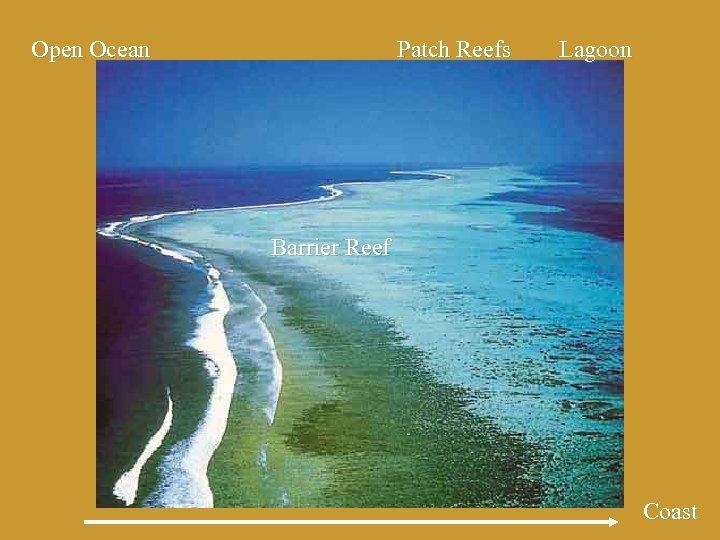 Open Ocean Patch Reefs Lagoon Barrier Reef Coast