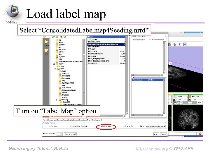 """Load label map Select """"Consolidated. Labelmap 4 Seeding. nrrd"""" Turn on """"Label Map"""" option"""