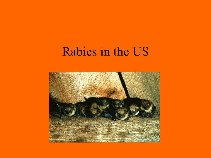 Rabies in the US