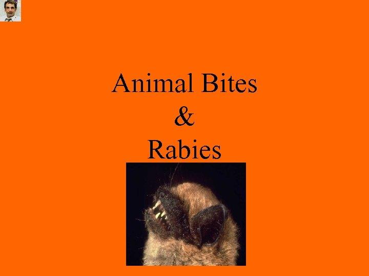 Animal Bites & Rabies