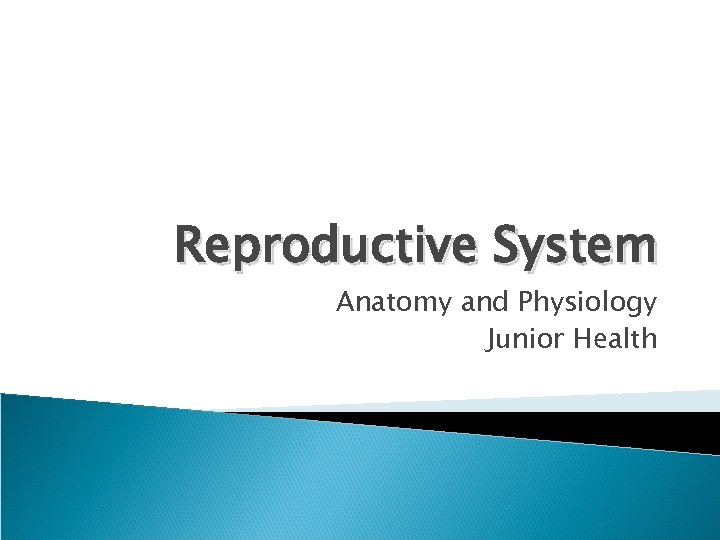 Reproductive System Anatomy and Physiology Junior Health