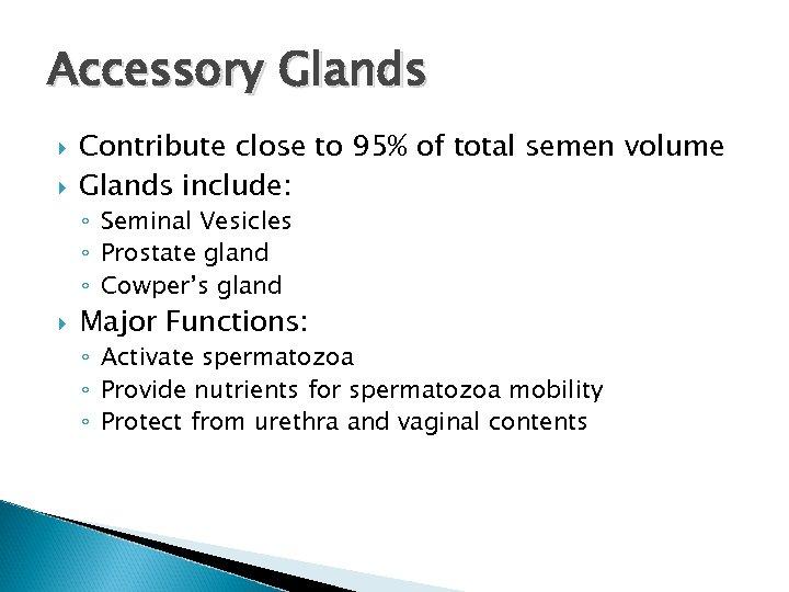 Accessory Glands Contribute close to 95% of total semen volume Glands include: ◦ Seminal