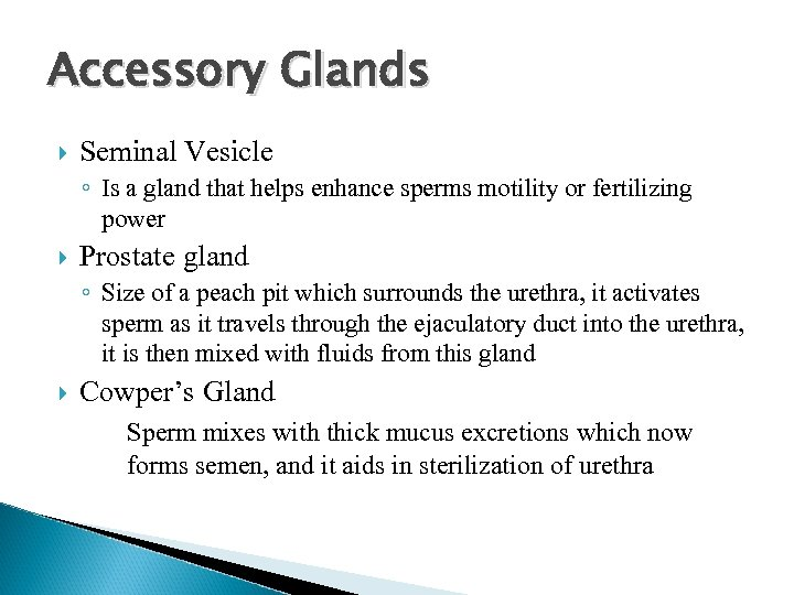 Accessory Glands Seminal Vesicle ◦ Is a gland that helps enhance sperms motility or