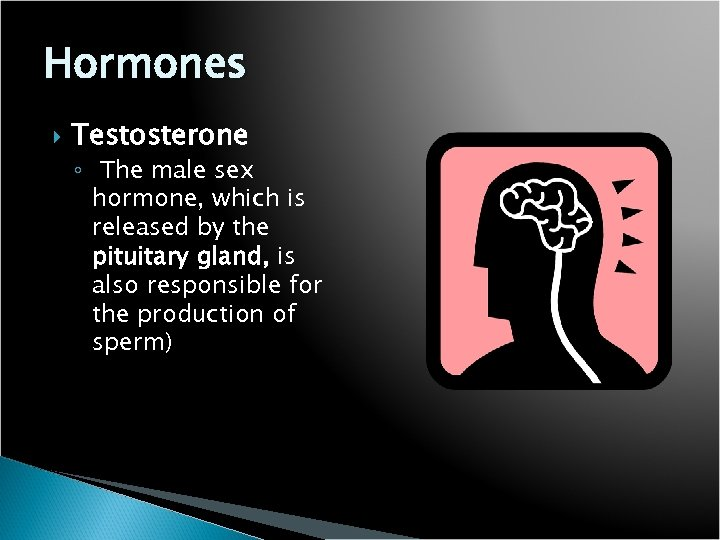Hormones Testosterone ◦ The male sex hormone, which is released by the pituitary gland,
