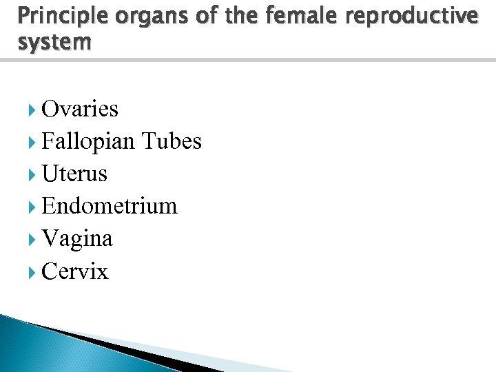 Principle organs of the female reproductive system Ovaries Fallopian Tubes Uterus Endometrium Vagina Cervix