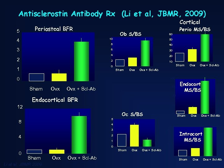 Antisclerostin Antibody Rx (Li et al, JBMR, 2009) 5 Cortical Periosteal BFR Perio MS/BS