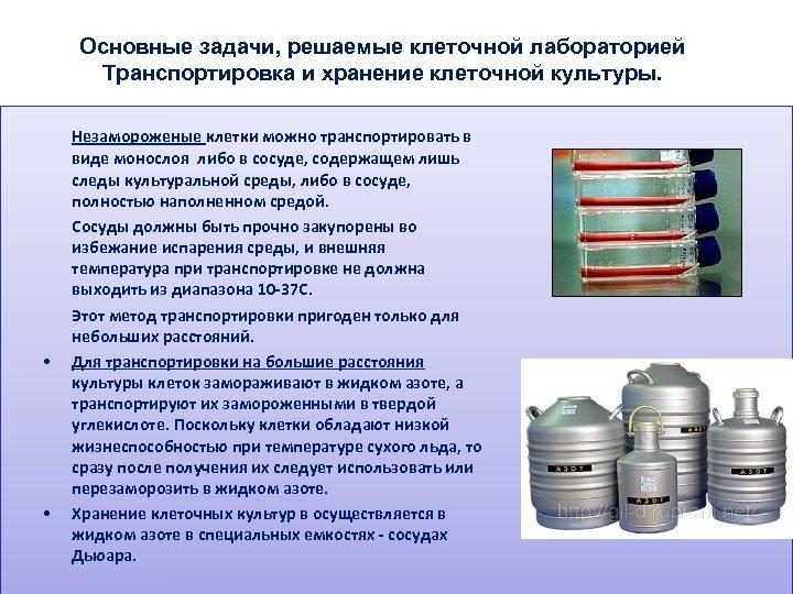 Основные задачи, решаемые клеточной лабораторией Транспортировка и хранение клеточной культуры. • • Незамороженые клетки