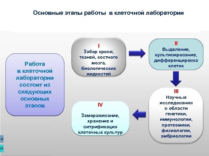 Основные этапы работы в клеточной лаборатории I Работа в клеточной лаборатории состоит из следующих
