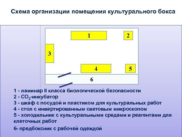 Схема организации помещения культурального бокса 1 2 3 4 5 6 1 - ламинар