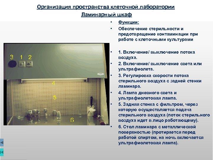 Организация пространства клеточной лаборатории Ламинарный шкаф • • Функции: Обеспечение стерильности и предотвращение контаминации