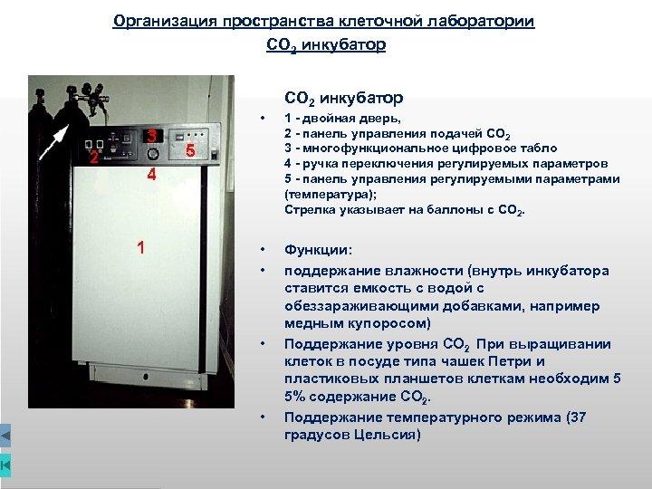 Организация пространства клеточной лаборатории СО 2 инкубатор • • • 1 - двойная дверь,