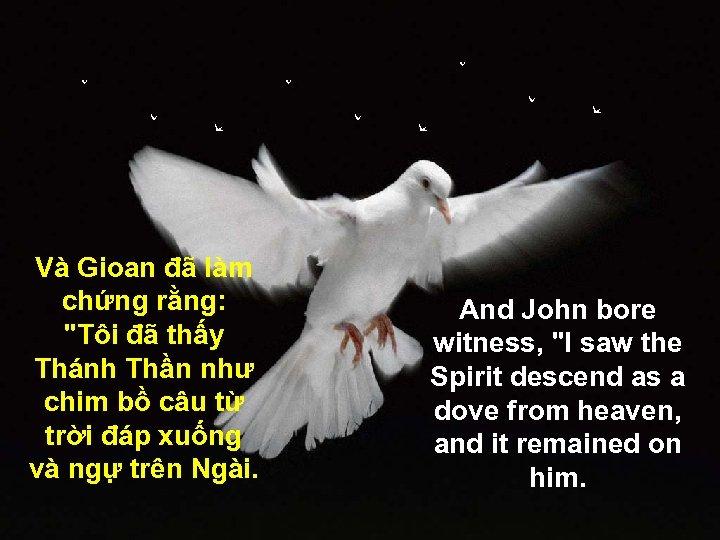Và Gioan đã làm chứng rằng: