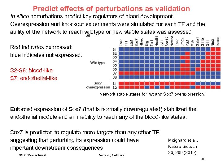 Predict effects of perturbations as validation In silico perturbations predict key regulators of blood