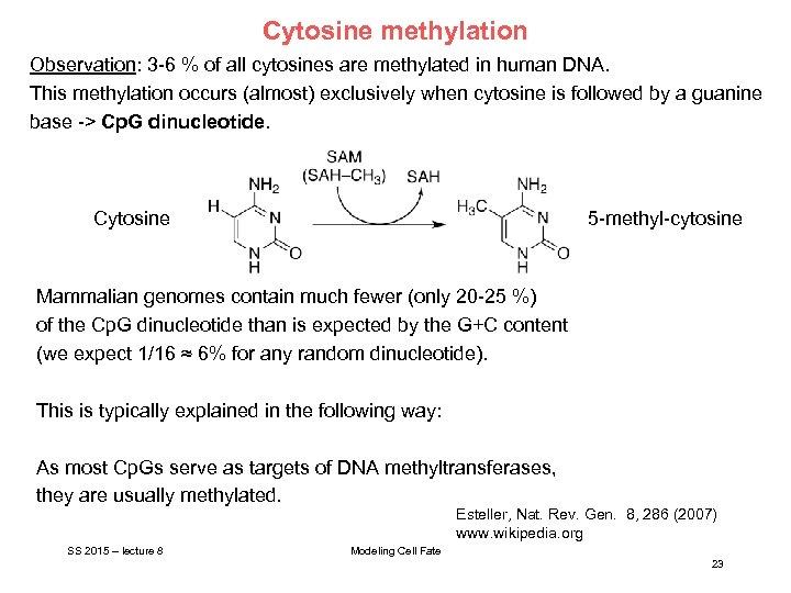 Cytosine methylation Observation: 3 -6 % of all cytosines are methylated in human DNA.