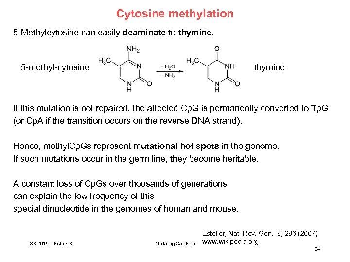 Cytosine methylation 5 -Methylcytosine can easily deaminate to thymine. 5 -methyl-cytosine thymine If this