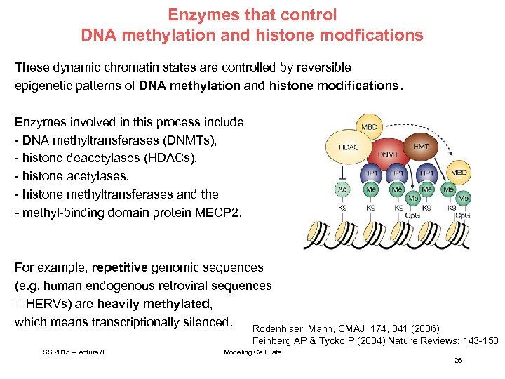 Enzymes that control DNA methylation and histone modfications These dynamic chromatin states are controlled
