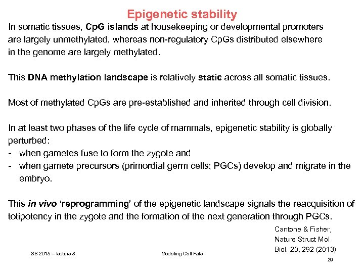 Epigenetic stability In somatic tissues, Cp. G islands at housekeeping or developmental promoters are