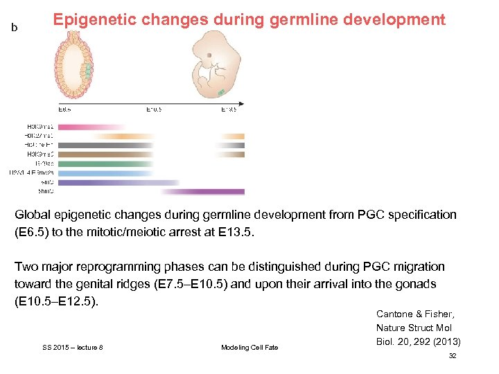 Epigenetic changes during germline development Global epigenetic changes during germline development from PGC specification