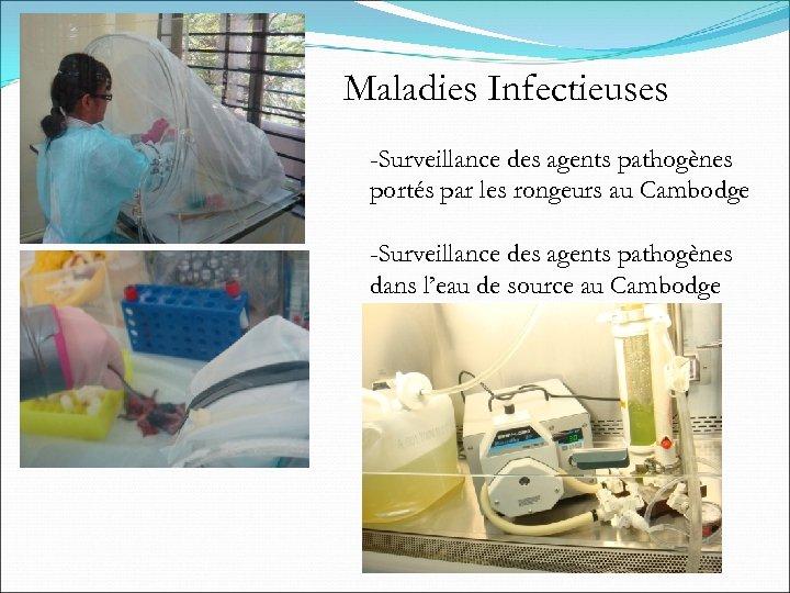 Maladies Infectieuses -Surveillance des agents pathogènes portés par les rongeurs au Cambodge -Surveillance des