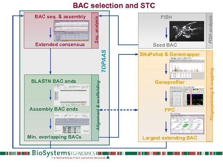 Seed BAC Assembly BAC ends Min. overlapping BACs SNa. Pshot & Genemapper Genoprofiler FPC
