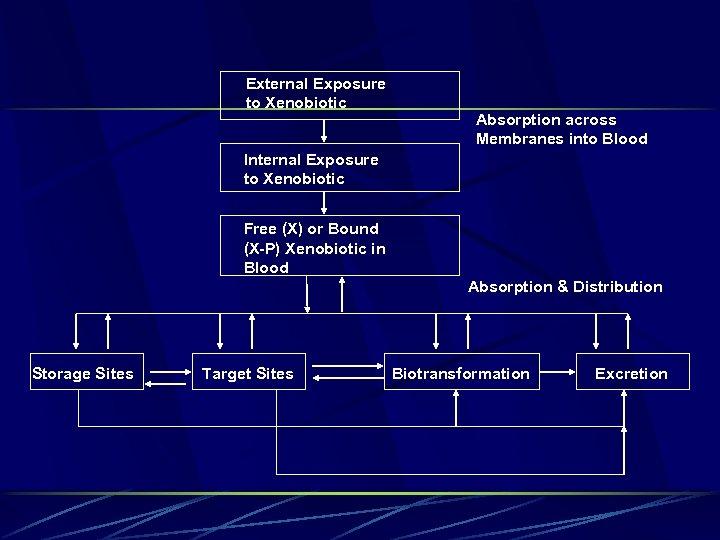 External Exposure to Xenobiotic Absorption across Membranes into Blood Internal Exposure to Xenobiotic Free
