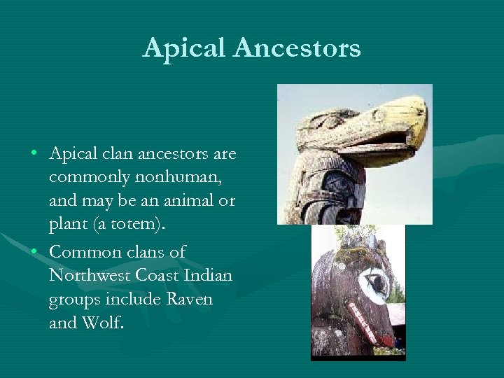 Apical Ancestors • Apical clan ancestors are commonly nonhuman, and may be an animal