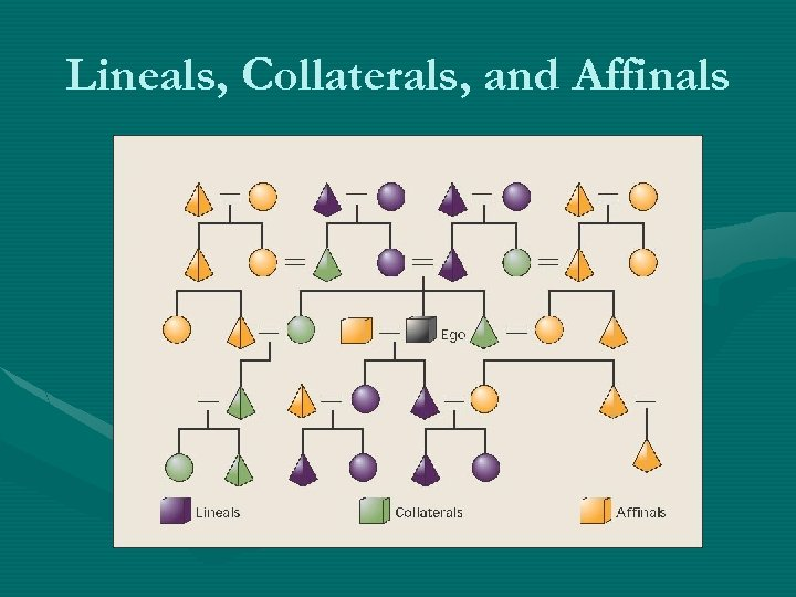 Lineals, Collaterals, and Affinals
