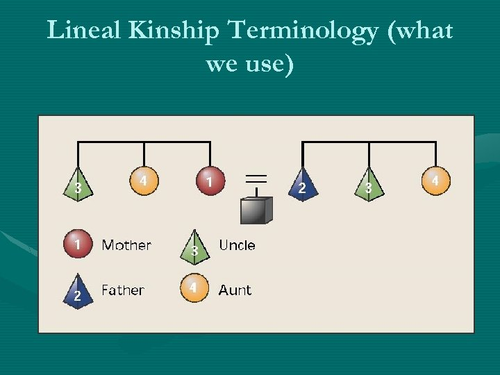 Lineal Kinship Terminology (what we use)