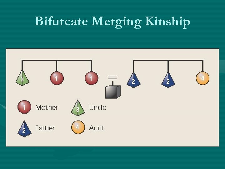 Bifurcate Merging Kinship