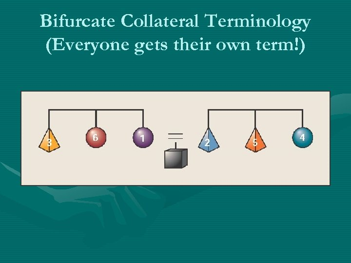 Bifurcate Collateral Terminology (Everyone gets their own term!)