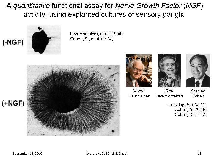 A quantitative functional assay for Nerve Growth Factor (NGF) activity, using explanted cultures of