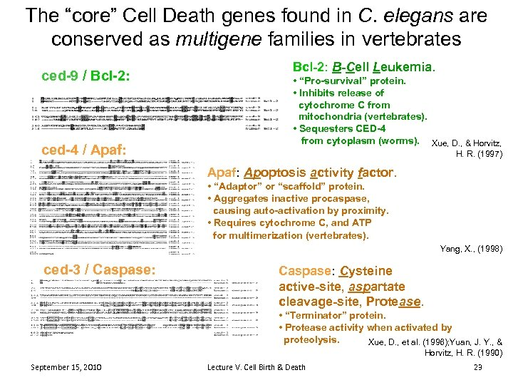 """The """"core"""" Cell Death genes found in C. elegans are conserved as multigene families"""