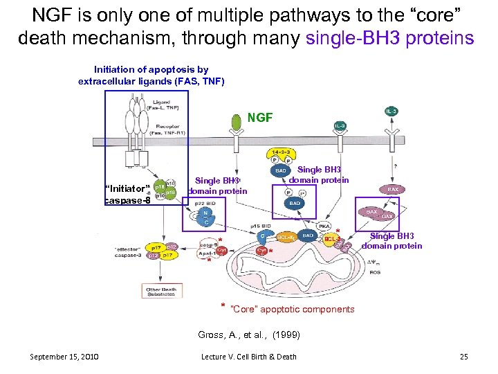 """NGF is only one of multiple pathways to the """"core"""" death mechanism, through many"""