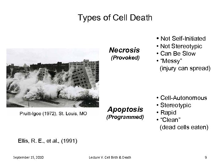 Types of Cell Death • Not Self-Initiated Necrosis (Provoked) Apoptosis (Programmed) • Not Stereotypic