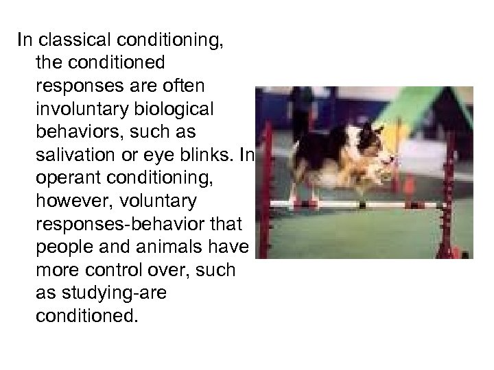 In classical conditioning, the conditioned responses are often involuntary biological behaviors, such as salivation