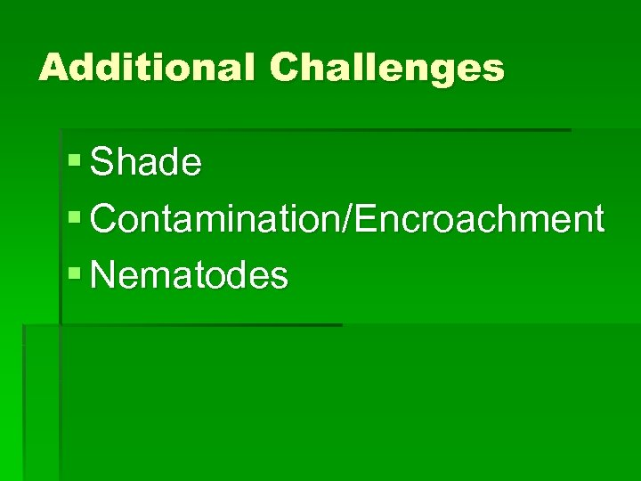 Additional Challenges § Shade § Contamination/Encroachment § Nematodes