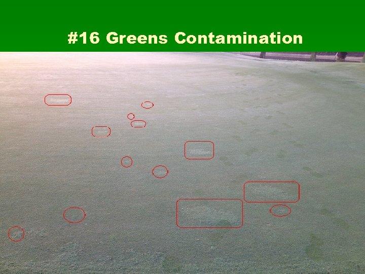 #16 Greens Contamination