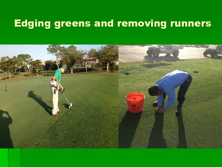Edging greens and removing runners