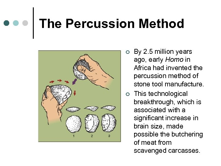 The Percussion Method ¢ ¢ By 2. 5 million years ago, early Homo in