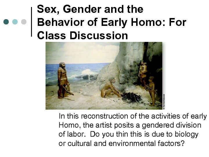 Sex, Gender and the Behavior of Early Homo: For Class Discussion In this reconstruction