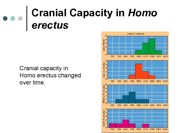 Cranial Capacity in Homo erectus Cranial capacity in Homo erectus changed over time.