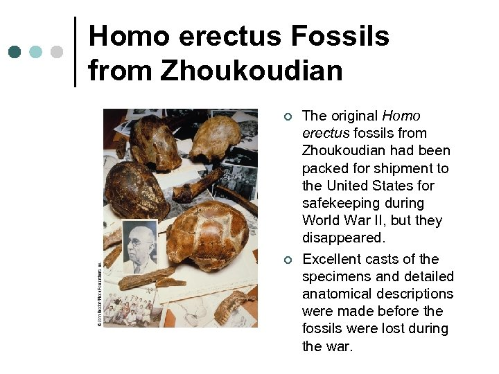 Homo erectus Fossils from Zhoukoudian ¢ ¢ The original Homo erectus fossils from Zhoukoudian