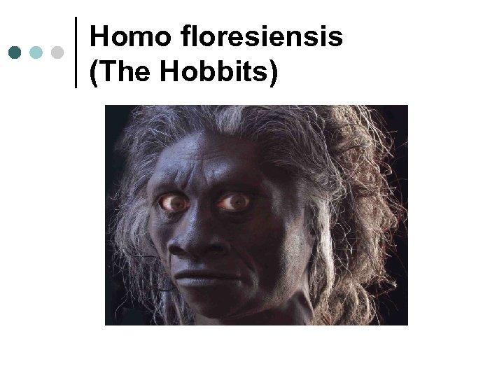 Homo floresiensis (The Hobbits)