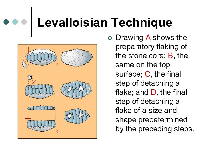 Levalloisian Technique ¢ Drawing A shows the preparatory flaking of the stone core; B,