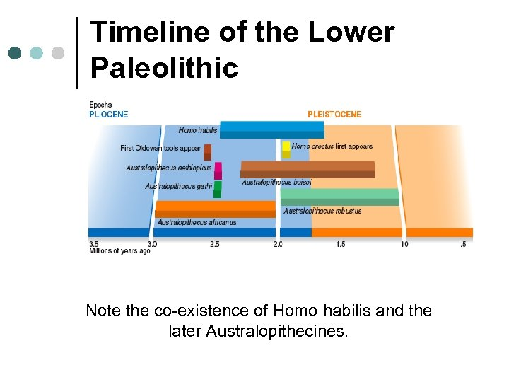 Timeline of the Lower Paleolithic Note the co-existence of Homo habilis and the later