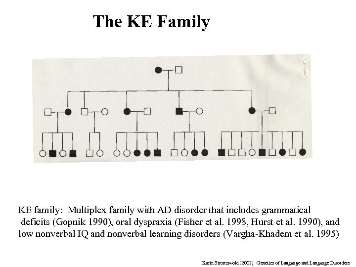 The KE Family KE family: Multiplex family with AD disorder that includes grammatical deficits