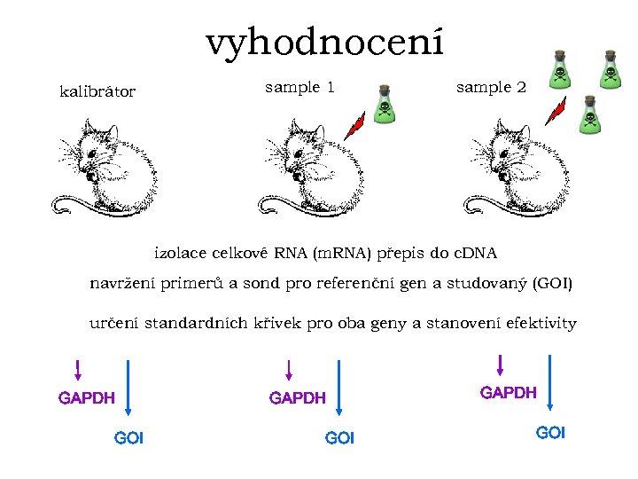 vyhodnocení kalibrátor sample 1 sample 2 izolace celkové RNA (m. RNA) přepis do c.