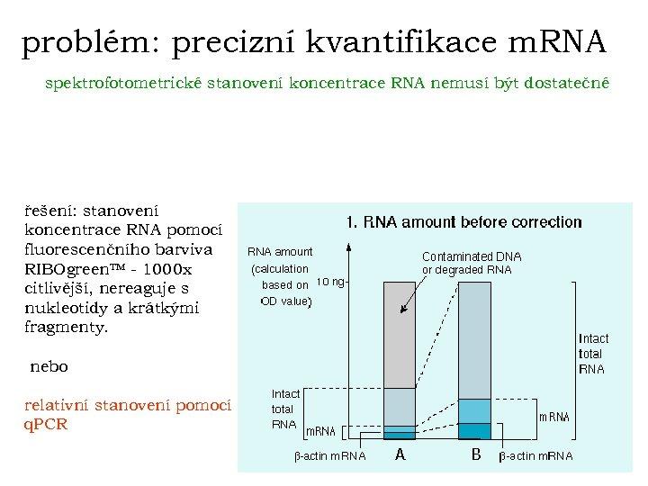 problém: precizní kvantifikace m. RNA spektrofotometrické stanovení koncentrace RNA nemusí být dostatečné řešení: stanovení